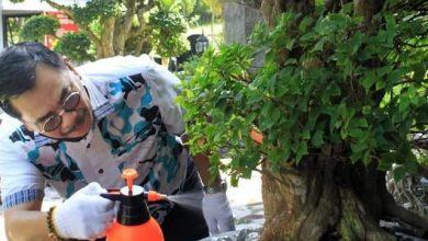 Photo of Bikin Happy, Alasan Soerya Respationo Gemar Merawat Tanaman di Rumah
