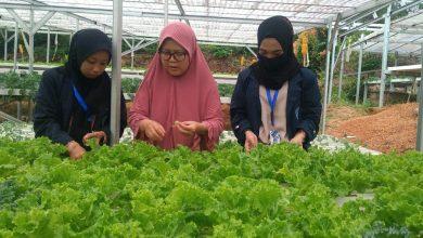 Photo of Beromset Jutaan Rupiah, Weli Rasakan Nikmatnya Bertani Hidroponik